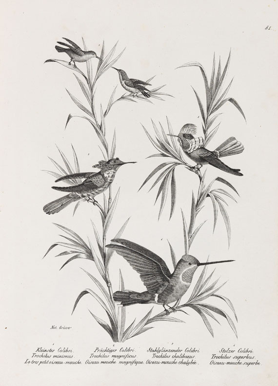 Heinrich Rudolf Schinz - Naturgeschichte der Vögel. 2 Bde. -