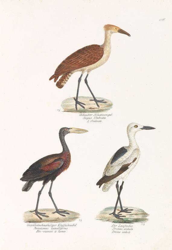 Heinrich Rudolf Schinz - Naturgeschichte der Vögel. 2 Bde.