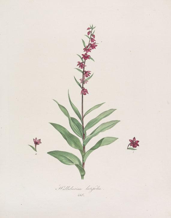 Franz de Paula von Schrank - Flora Monacensis. Bde. 2-4 in 3 Bdn. -