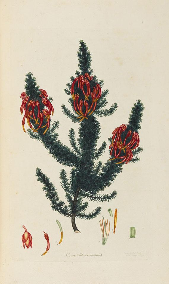 Henry Charles Andrews - Coloured engravings of heaths -
