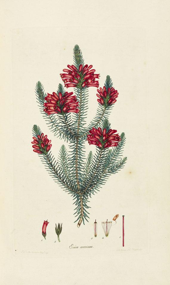 Henry Charles Andrews - Coloured engravings of heaths