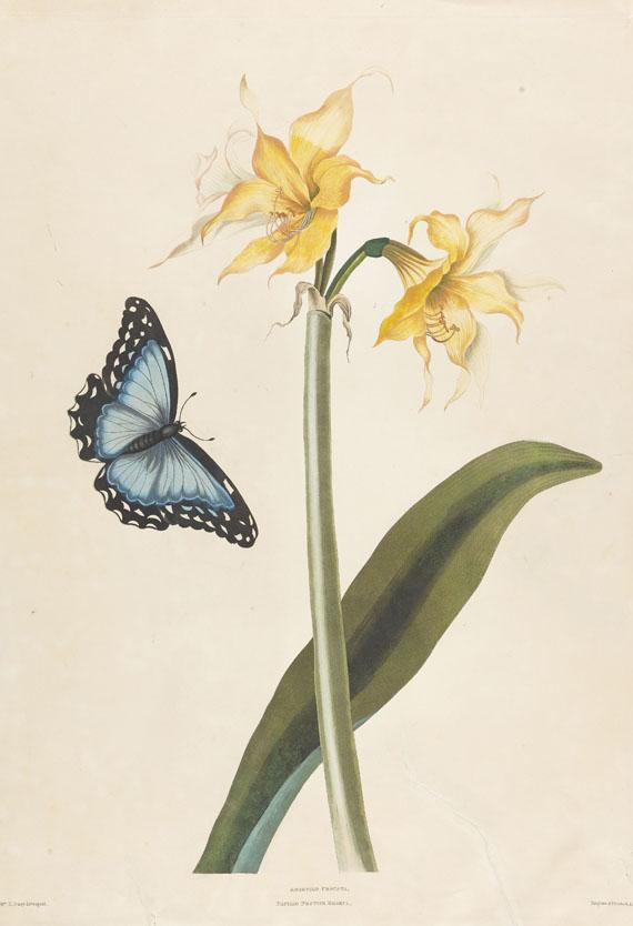 Priscilla Susan Bury - A selection of Hexandrian plants (Fragment mit ca. 40 Bll.)