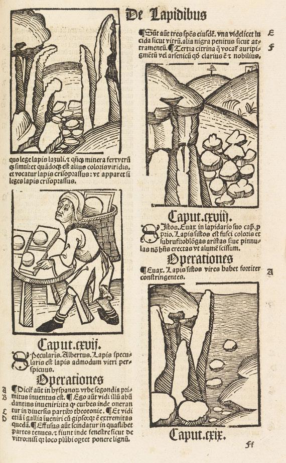 Hortus sanitatis - Hortus Sanitatis