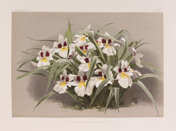 Frederick Sander - Reichenbachia. 7 Bände - Weitere Abbildung
