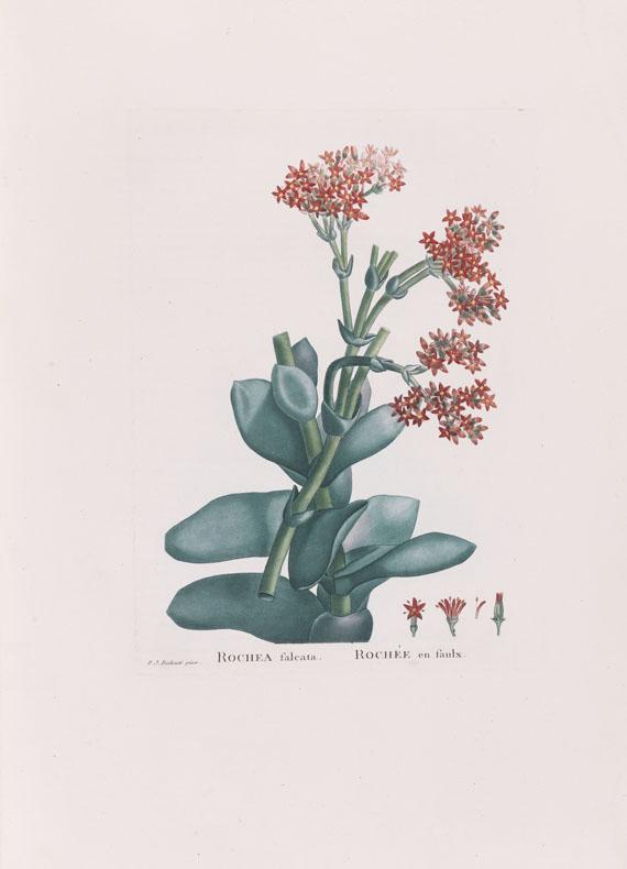 Augustin-Pyrame de Candolle - Plantarum historia succulentarum. 2 Bände - Weitere Abbildung