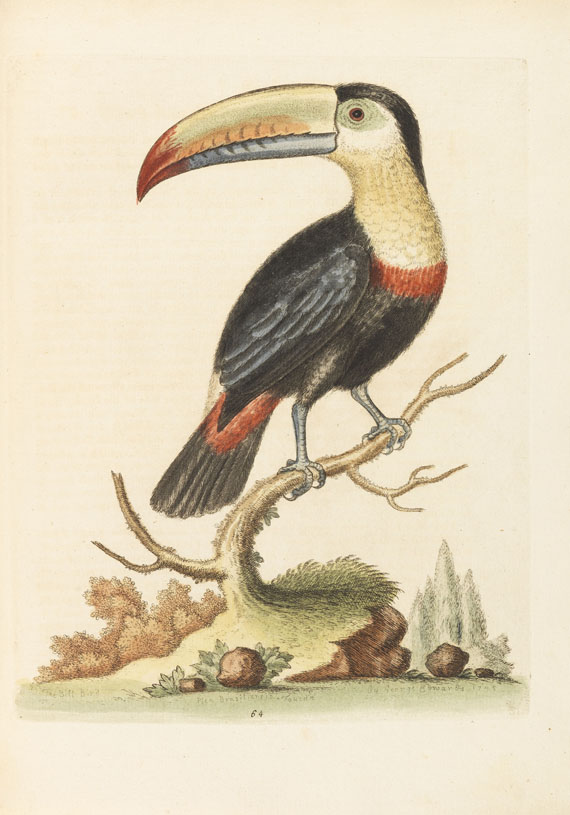 George Edwards - Natural History of Birds, 4 Bde. + Gleanings, 3 Bde. Zus. 7 Bde. - Weitere Abbildung
