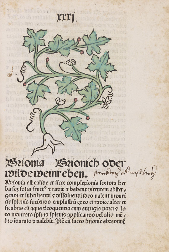 - Herbarius Pataviae -