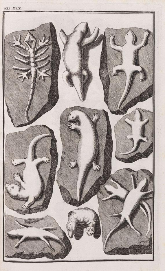 Johann Bartholomäus Adam Beringer - Lithographiae Wirceburgensis