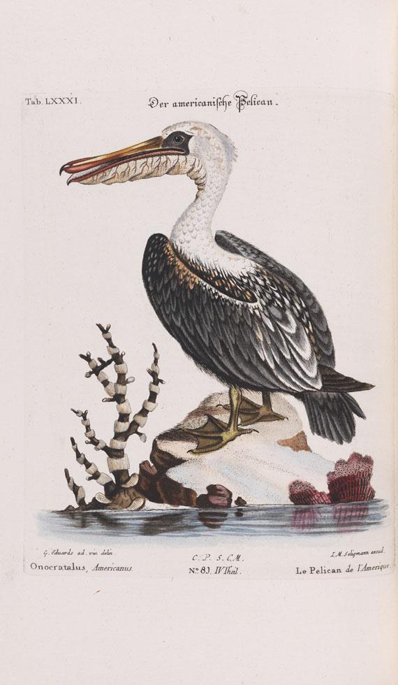 Johann Michael Seligmann - Sammlung seltener Vögel - Weitere Abbildung