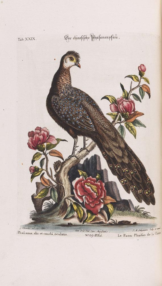 Johann Michael Seligmann - Sammlung seltener Vögel