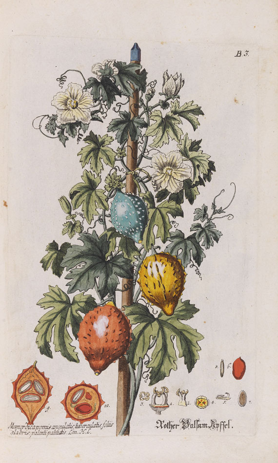 Georg Wolfgang Knorr - Regnum florae -