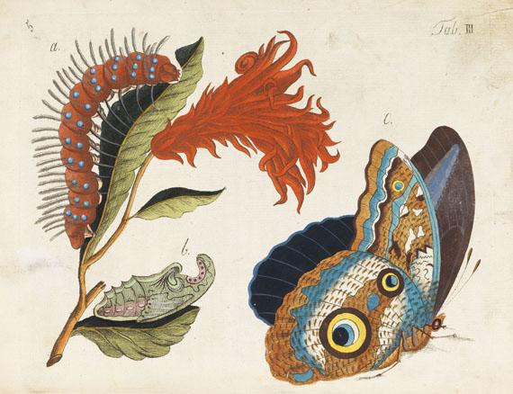 - Beschreibung in- und ausländischer Schmetterlinge -