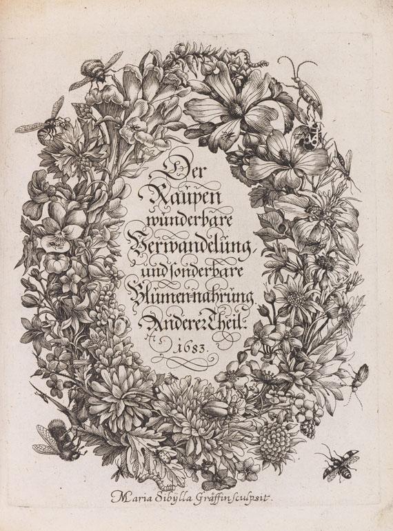 Maria Sibylla Merian - Der Raupen Verwandelung - Weitere Abbildung