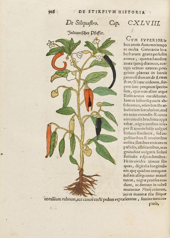 Hieronymus Bock - De stirpium - Weitere Abbildung