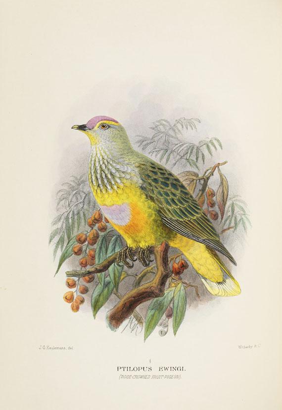Gregory McAlister Mathews - Birds of Australia. 12 Bände - Weitere Abbildung