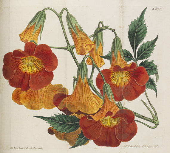 William Curtis - Botanical Magazine, Bd 1 - 53. 40 Bde. -