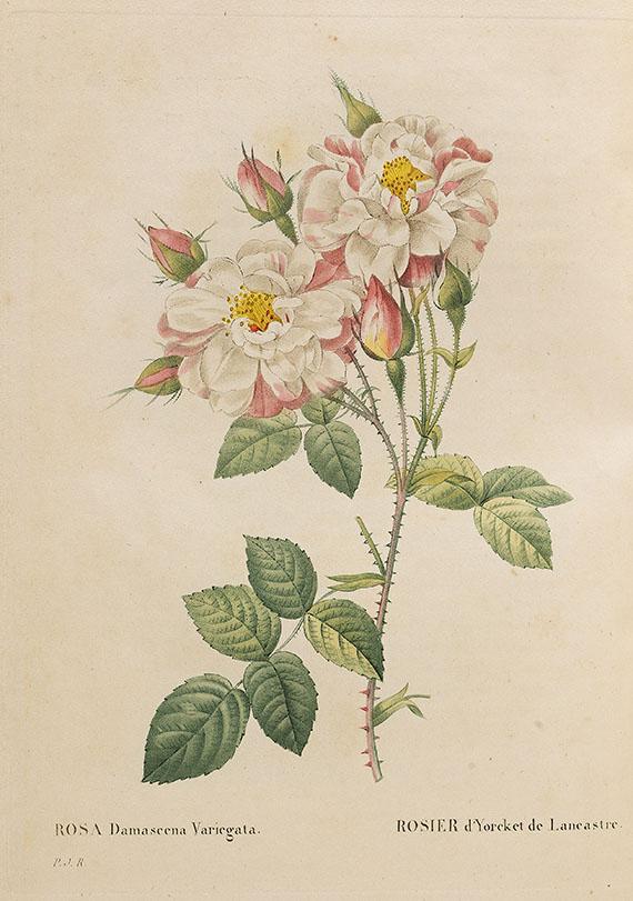Pierre Joseph Redouté - Les roses. 3 Bände in 2