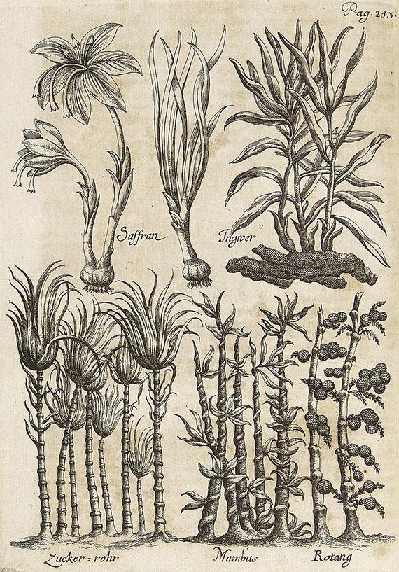 Johann Sigismund Elsholt - Diaeteticon