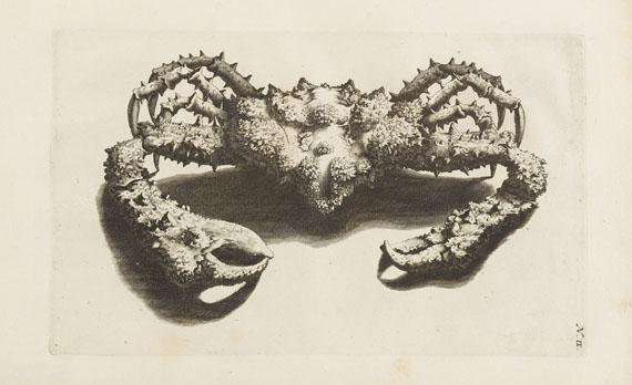 Georg Eberhard Rumpf - Thesaurus imaginum piscium testaceorum