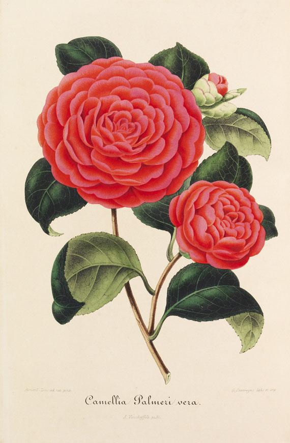 Ambroise Verschaffelt - Nouvelle Iconographie des Camellias. 13 in 8 Bänden