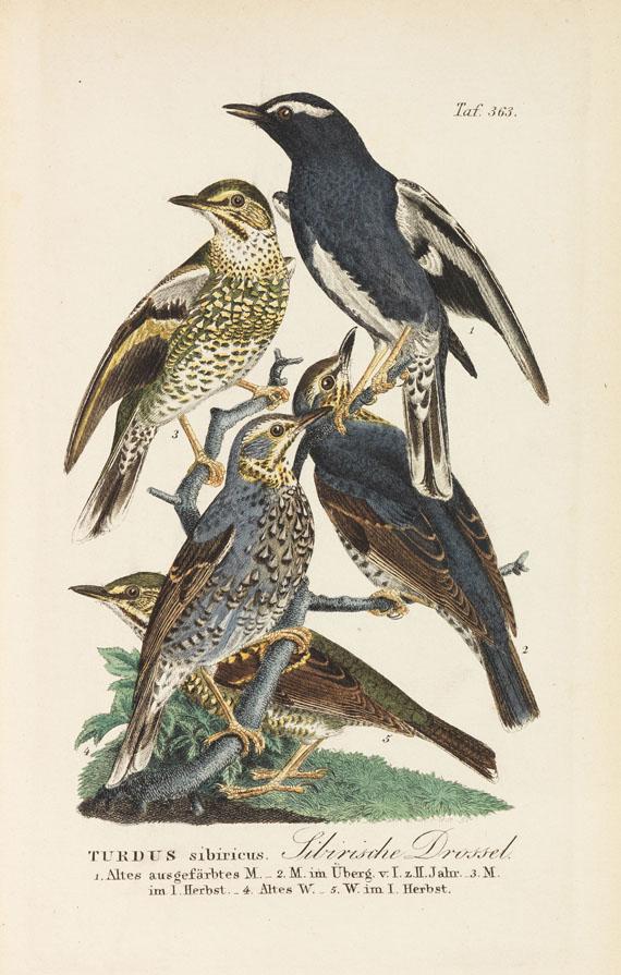 Johann Andreas Naumann - Naumanns Naturgeschichte der Vögel. 15 Bände