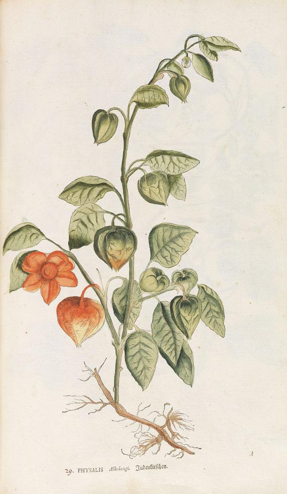 Salomon Schinz - Anleitung zu der Pflanzenkenntniß