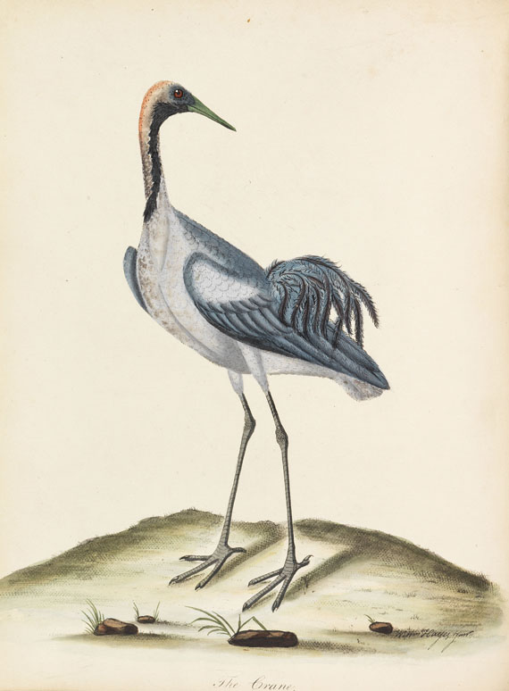 William Hayes - Birds