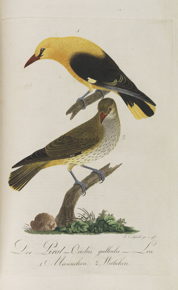 Johann Conrad Susemihl - Teutsche Ornithologie
