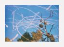 Gerhard Richter - Funken (Landschaft)