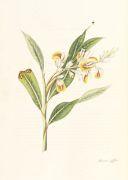 William Roscoe - Monandrian Plants, 1828