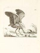 - Ornithologie de la France