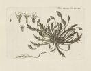 - Flora Danica. 10 Bde. 1761-99