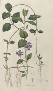William Curtis - Flora Londinensis. 2 Bde. 1775-1798.