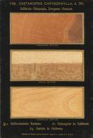 Romeyn Beck Hough - The American Woods. 3 Textbde. und 14 Kassetten mit Tafeln. Zus. 17 Bde.