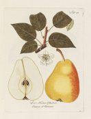 Johann Kraft - Abhandlung von den Obstb�umen. 1792