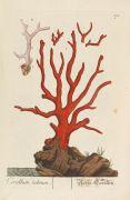 Elisabeth Blackwell - Herbarium selectum. Bd. 3 und 4 in 1 Bd.