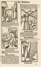 - Hortus Sanitatis 1517
