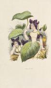 Louise Leneveux - Les fleurs parlantes.