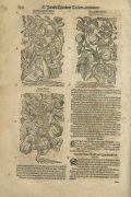 Jacob Theodor Tabernaemontanus - Kraeuterbuch. 2 Bde.