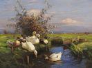 Alexander Koester - Sieben Enten am Graben