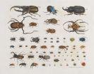 Aloys Z�tl - Insecten (K�fer)