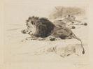 Wilhelm Kuhnert - 3 Bll.: Ruhende L�wen. Afrikanisches Nashorn. Elch