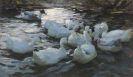 Alexander Koester - Elf Enten im Wasser