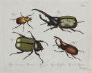 Carl Gustav Jablonsky - Insekten. Dabei: Cicaden