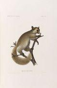 Wilhelm C. H. Peters - Reise nach Mossambique. 4 Bde. Dabei: Botan, Tafelband zu: Naturwiss. Reise nach Mossambique
