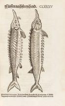Conrad Gesner - Vogel-, Thier-, Fisch- und Schlangenbuch