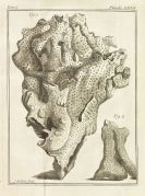 Jean-Etienne Guettard - Memoires sur diff�rentes parties des sciences et arts. 5 Bde. 1768