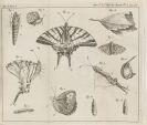 René Antoine F. de Réaumur - Memoires pour servir à l'histoire des insectes