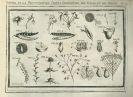 Rozier - Démonstrations élémentaires de botanique. 2 Bde.