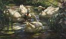 Alexander Koester - Enten auf dem Waldweiher